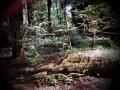 HumboldtRedwoodsStatePark2