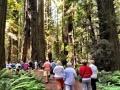 HumboldtRedwoodsStatePark3